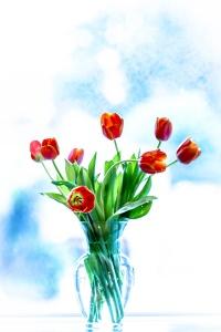 IMG_0645-tulips